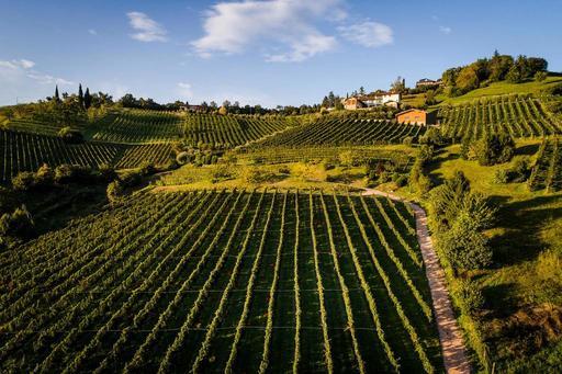 Terre del Vescovado -  Il Cipresso, cantine aperte a San Martino