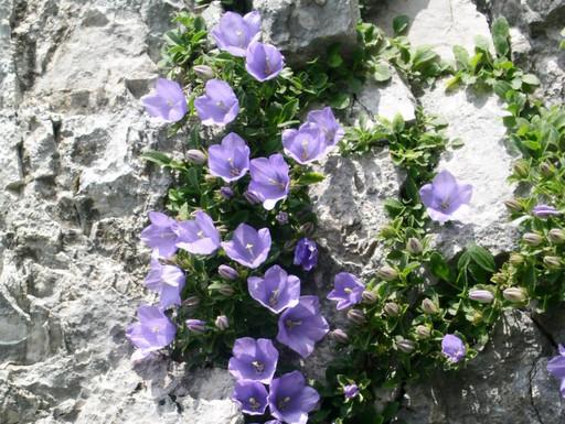 Itinerari Val Brembana - Sentiero fiori e farfalle