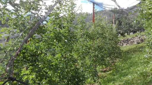 Apple growers' school
